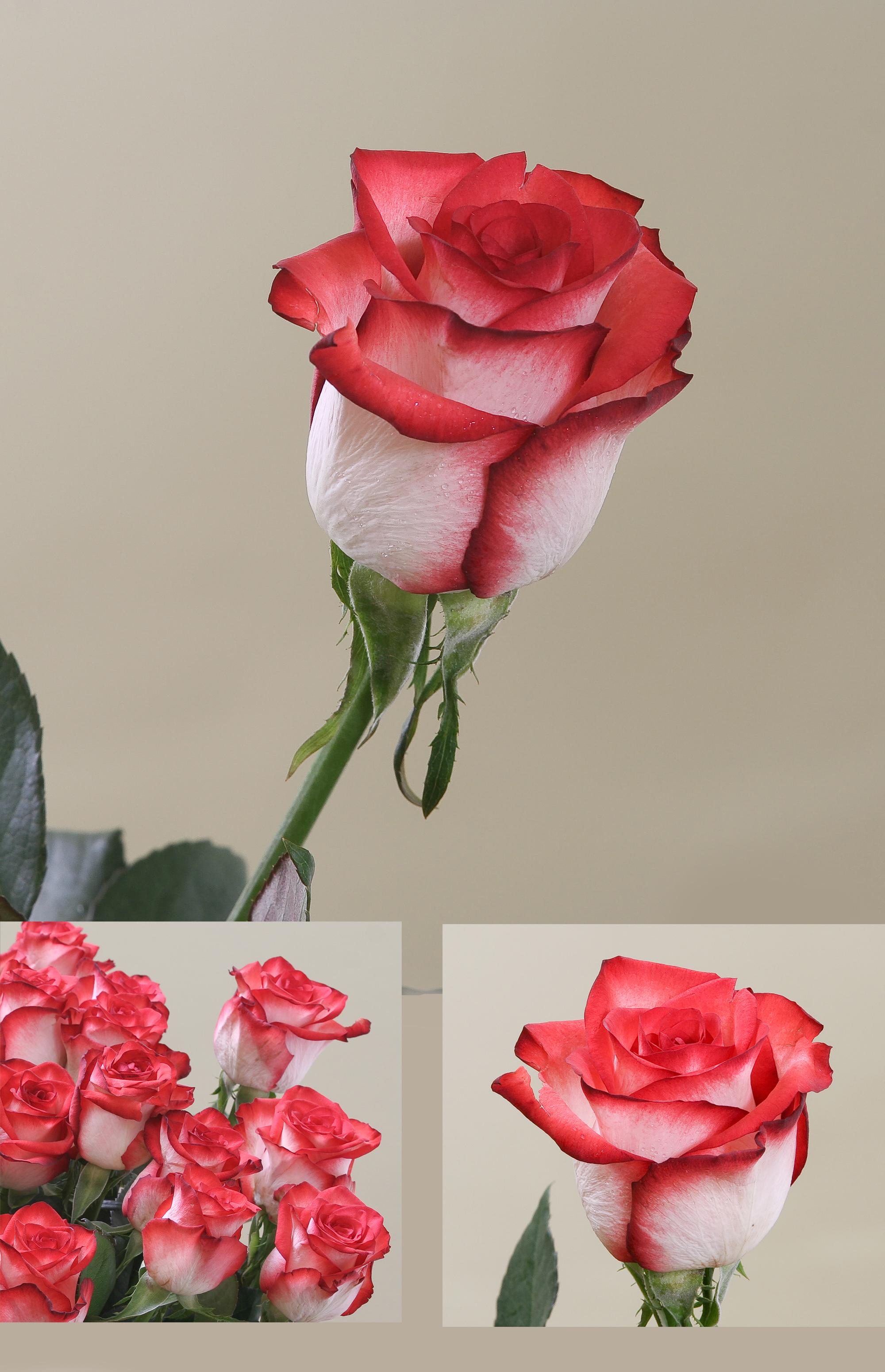 Приснились белые розы 4