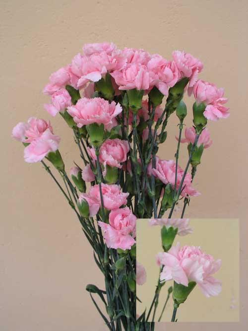 """материалы связанные с  """"доставка цветов в г красногорске экспресс услуги """""""